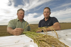Tom Butler farms rice with his father, Steve, in Sutter and Yolo Counties.