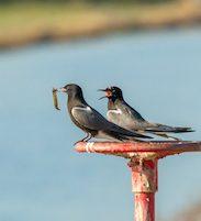 birds sitting on valve wheel