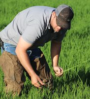 Brian McKenzie working in rice field