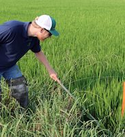 farmer in rice field