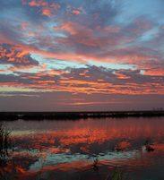 sunrise over rice fields