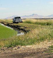 truck driving through rice farm