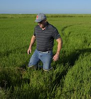 Tom Butler in rice fields