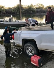 scientists releasing tagged salmon into sacramento river