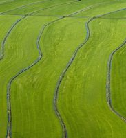 aerial shot of rice fields
